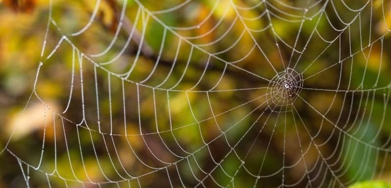 delicate_spider_web-wallpaper-800x600.jpg
