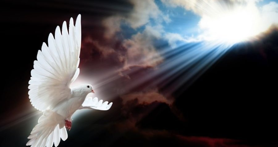 light_wings_white_dove_1920x1080_48456.jpg