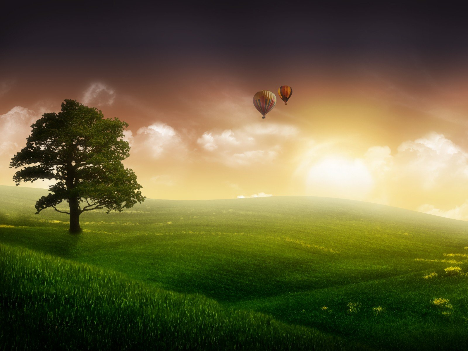 balloons-and-a-tree-wallpapers_11827_1600x1200.jpg