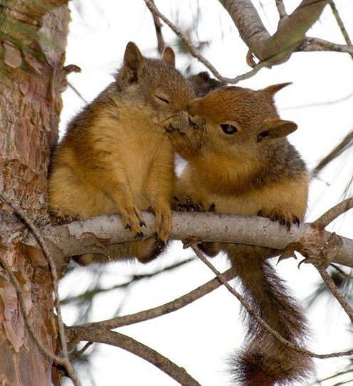 squirrel-love1.jpg